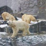 Polar bears. Outside was -14C.