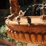 Les oiseaux viennent se baigner dans la fontaine, havre de paix
