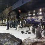 Foto de Kelly Tarlton's Sea Life Aquarium