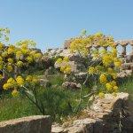 Le Temple C de l'acropole