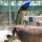 Photo of Curacao Zoo