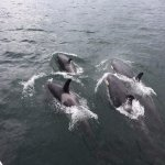 Killer Whales came up for air right next to our boat shortly after they swam under it.