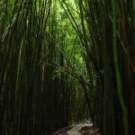 Bamboo canyon