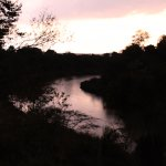 Evening view off the deck of the river filled with hippos