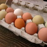 Farm Fresh Eggs from Pastured Chickens