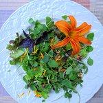 Fresh Organic Micro-Green Salad