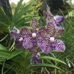 National Orchid Garden Foto