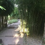 Jardin du restaurant.
