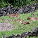 Foto de Brevard Zoo