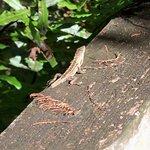 Corkscrew Swamp Sanctuary Foto
