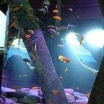 Pretty fishes.