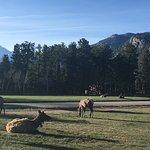 YMCA of the Rockies صورة