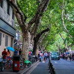 The beautiful tree-lined streets of the FFC in Shanghai