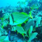 Great diving experience in outside reef Cancún (Herradura, Punta Negra) - plenty of life!
