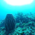 Great diving experience in outside reef Cancún (Herradura, Punta Negra)