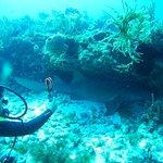 Great diving experience in outside reef Cancún (Herradura, Punta Negra) - nurse shark