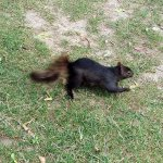 A squirrel scurrying across