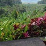 ภาพถ่ายของ Pondok Batur Indah