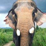 Hutsadin Elephant Foundation Foto