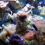 ภาพถ่ายของ Aquarium de Biarritz