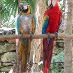 Sandos Caracol Eco Resort Foto