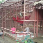 Photo of Foundation Jaguar Rescue Center