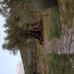 Foto de Il Borgo dell'Ulivo
