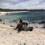 Galapagos Eco Friendly Foto