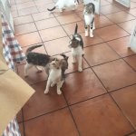 Cats waiting for breakfast!