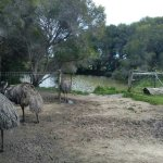 Photo of Maru Koala and Animal Park