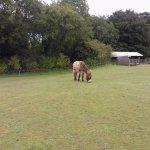 D'Artangnan the donkey