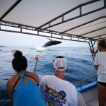 Whale watching tours available seasonally.
