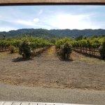 Vineyards at Paradigm 9/18/17