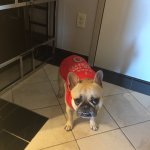Winston, getting ready for the game in our suite