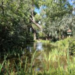 Jacona's pond