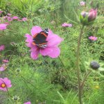 Photo of Applecross Walled Garden