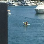 Owner and dog on paddle board in the marina
