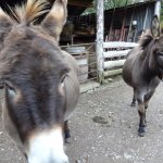 Meet the Donkeys