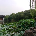 Photo of Xixi Wetland Park