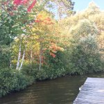 Fall colors beginning to show from a dock vantage point.