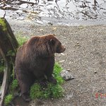 another grizzly out of the water