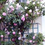 Un très beau jardin et beaucoup de fleurs odorantes au Manoir de Huchepie !