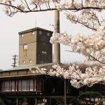 春 桜と蒸留塔