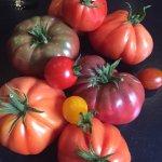 Les belles tomates de Christelle