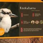 The sign on the Kookaburra's enclosure
