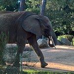 Zoo de La Flèche 1er septembre 2017