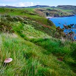 Parasol mushroom and Porth Ysgo bay.