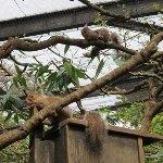 Inokashira Park Zoo Image
