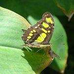Photo of Butterfly Farm