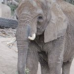 There were both indoor and outdoor facilities for the elephants